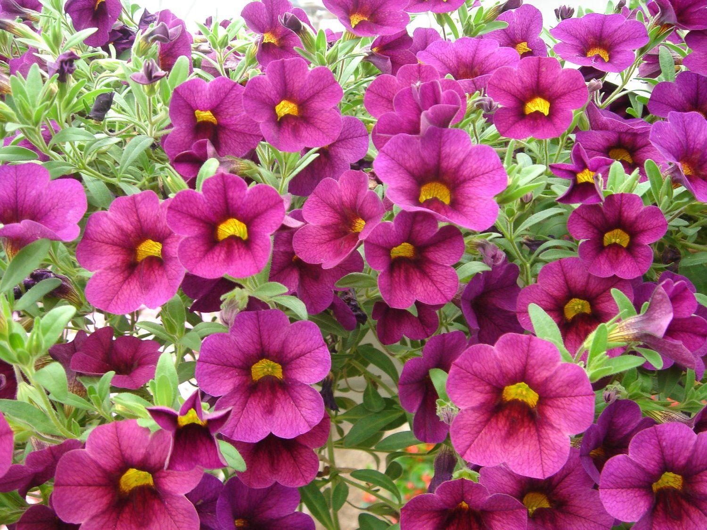 Blog Potratz Floral Shop And Greenhouses