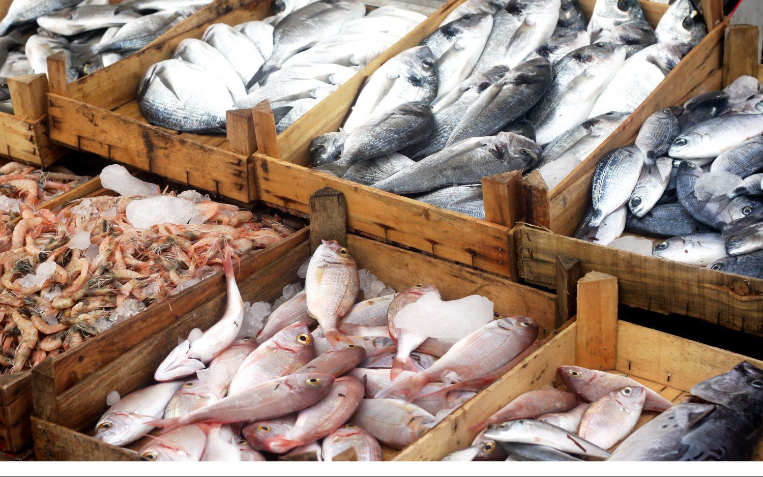 Shop now kyler 39 s catch seafood market for Seafood fish market