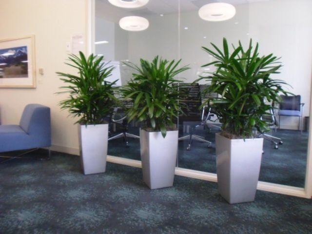 Gallery Interior Plant Design